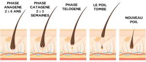 CYCLE-DU-POIL-EPILATION-DEFINITIVE-DOCTEUR-CHICHEPORTICHE-PARIS